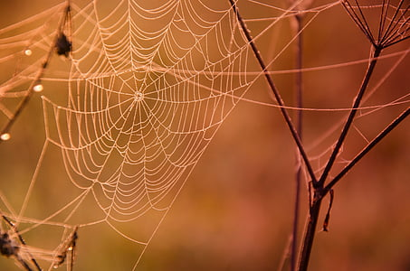 shallow focus photography of spiderweb on brown branches