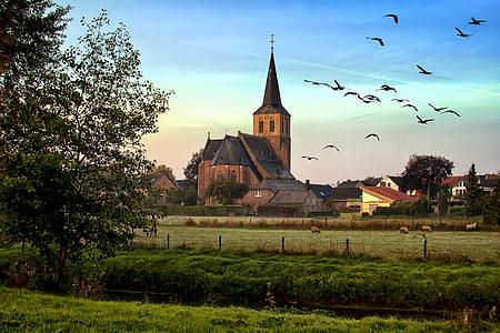 flock of bird flying on green fields