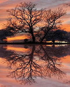 panoramic photo of bare tree silhouette during golden hour