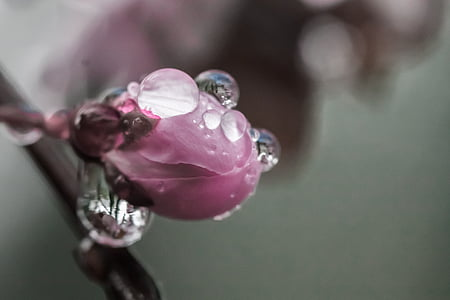 pink flower with dewdrops macro photography