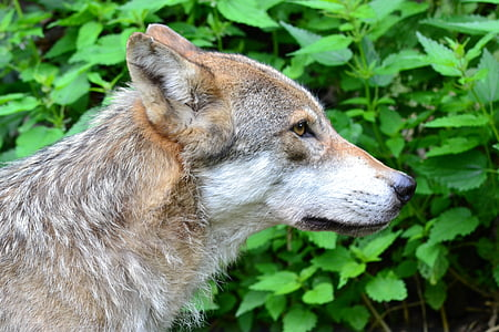 photo of short-coated tan wolf next to green leaf plant during daytime