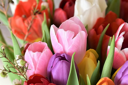 bouquet of assorted-color tulip flowers