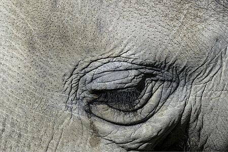 close up photography of elephant's eye