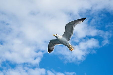 white bird flying during daytime