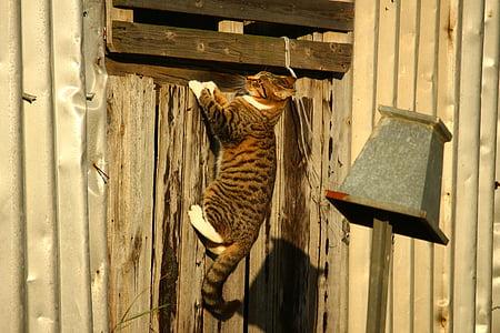 brown cat climbing