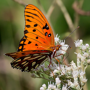 orange and black butterfly perched on flower