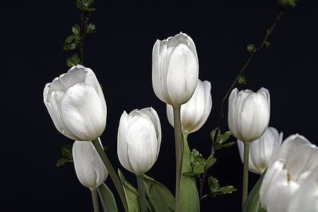 photo of eight white tulips