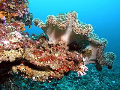 sea anemone underwater