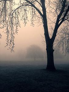 tree during fog