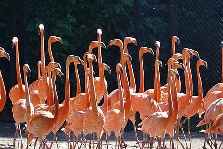 flock of brown bird photo during daytime