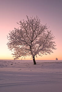 bare tree covered with snow