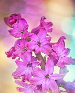 pink 6-petaled flowers