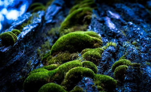 green moss in closeup photography