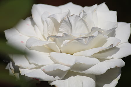 closeup photography of white flower