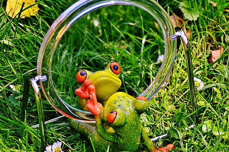 green frog looking at the mirror