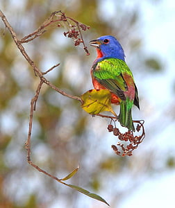 photography of bird of branch