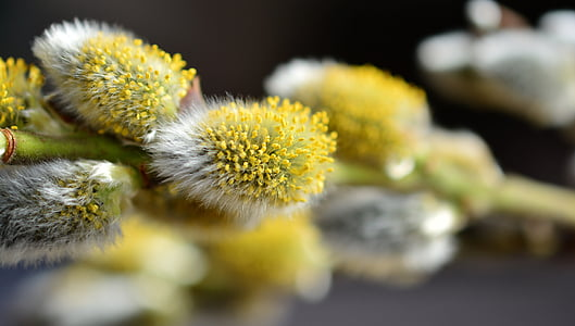 shallow depth of field yellow and white flowers