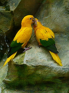 two yellow-and-green parrots on gray surface