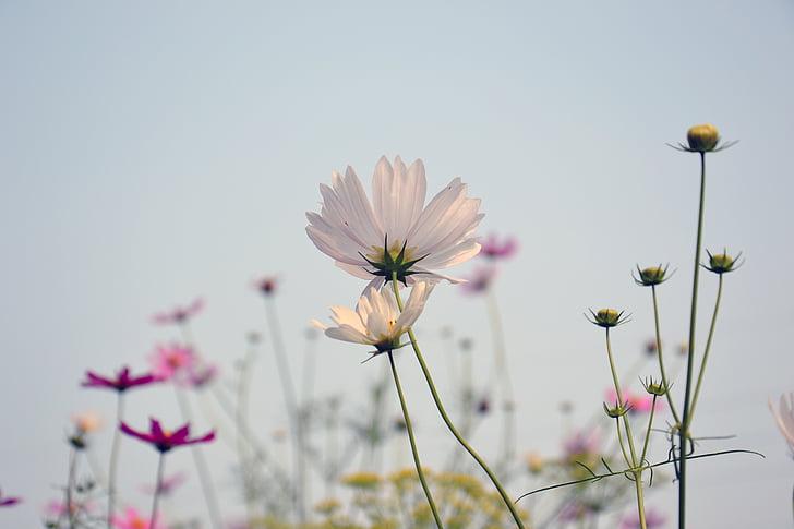 close up photo of white daisy