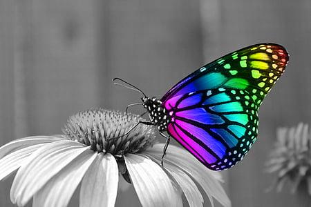multicolored monach butterfly