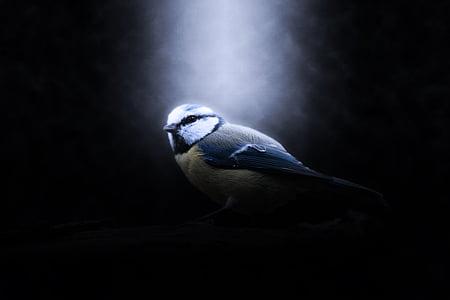 gray and white bird digital wallpaer