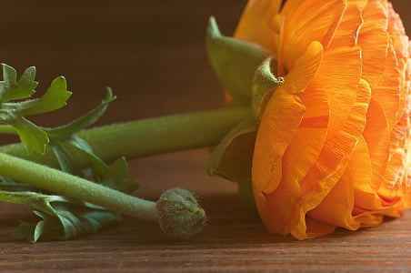 orange petaled flower on brown surface