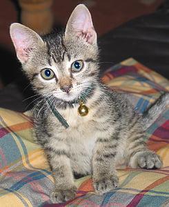 photo of brown tabby kitten