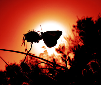 silhouette of butterfly perched on flower during golden hour photo