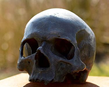 photography of black skull