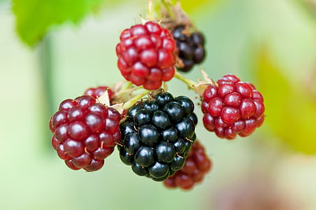 red and black berries