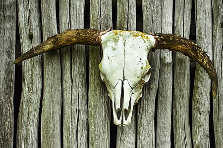 brown and white antler decor
