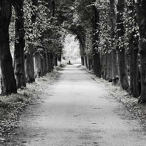grayscale photography of road under treeline