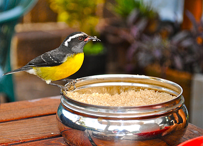 bird standing on stainless steel bowl