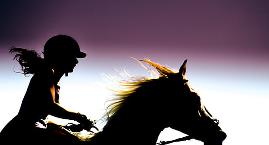 silhouette photo of equestrian riding on horse