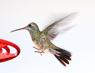 closeup photo of green and brown hummingbird