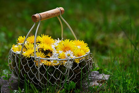 yellow and white flowers in basket