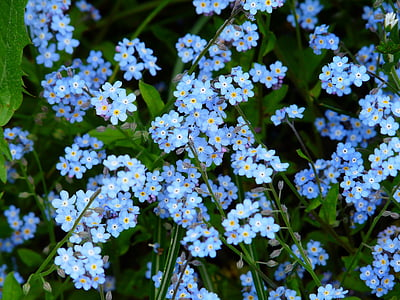pink and blue petaled flower