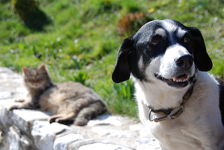 adult short-coated white and black dog standing on concrete wall near brown cat lying on wall
