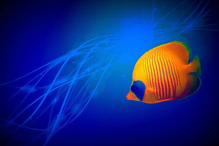 orange and blue fish illustration