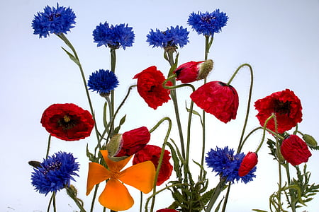 red, blue, and orange petaled flowers