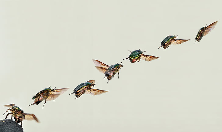 seven flying insects
