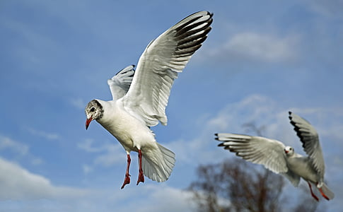 low angle photography of Franklin's gulls flying under blue sky during daytime