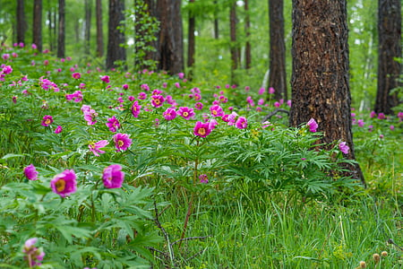 pink anemone flower near trees