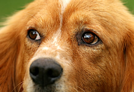 closeup photography of tan dog