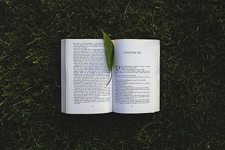 photo of opened book with leaf