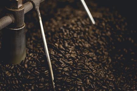 closeup photo of coffee beans