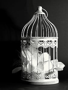 grayscale photography of feather in cage
