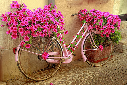 photography pink bicycle planting rack with purple flowers