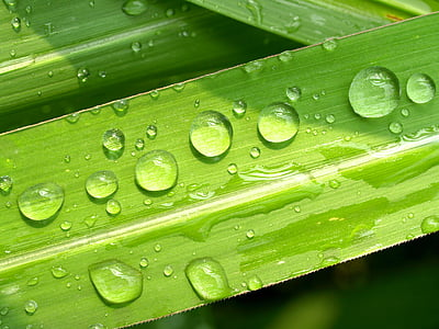 water drop of green leaf close up photography