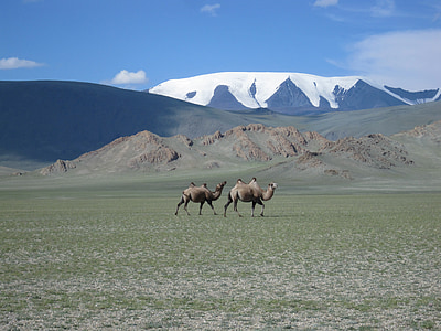 two camels walking near snow-covered mountain during daytime